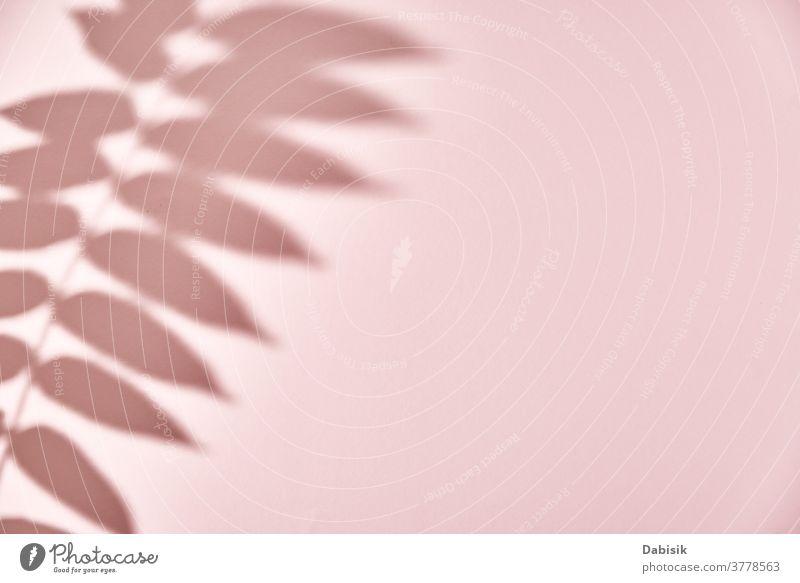 Blattschatten auf rosa Hintergrund. Kreativer abstrakter Hintergrund Schatten Blätter Pflanze Baum Laubwerk Textur weiß Licht Design Natur Ast Muster sonnig