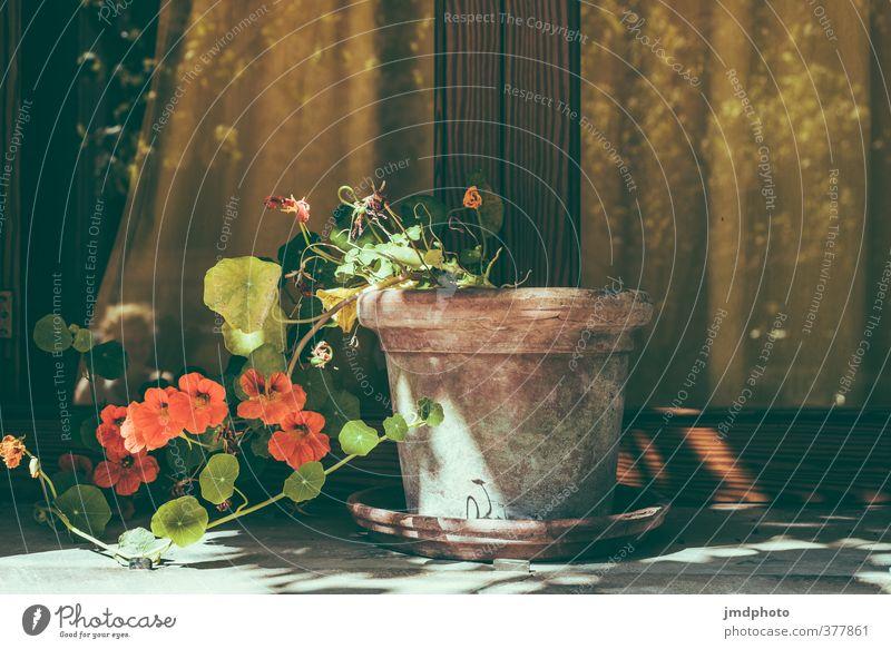 Blumentopf gewonnen! Freizeit & Hobby Ferien & Urlaub & Reisen Tourismus Dekoration & Verzierung Umwelt Sommer Pflanze Fenster Duft Orange Farbfoto