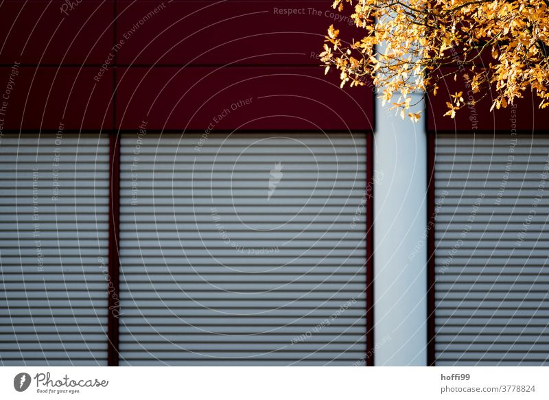 die herbstliche Blattfärbung vor urbaner Bürofassade wird von der Sonne ins Licht gestellt Herbst herbstliche Farben Herbstliche Bäume Baum Natur Tag