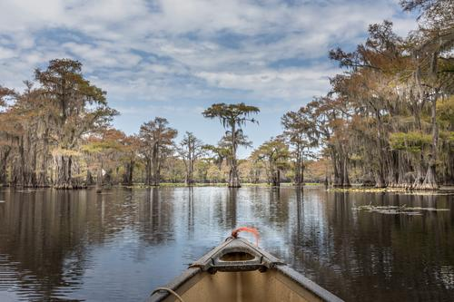 Kanufahren auf dem Caddo Lake zwischen Zypressenbäumen, Texas Sommer Kanusport State Park Caddo-See spanisches Moos Wasser mystisch märchenhaft Landschaft