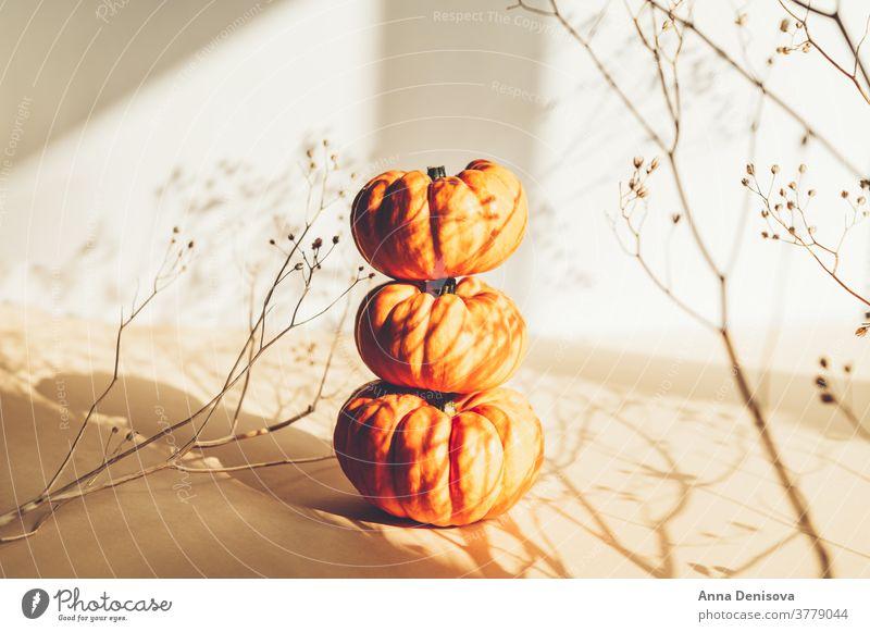 Winzige orangefarbene Kürbisse. Herbst-Konzept weiß Hintergrund Schatten saisonbedingt neblig Feier Dekoration & Verzierung Feiertag Natur Ernte Saison fallen