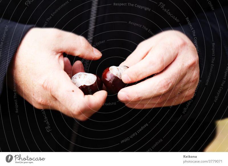 Männer Hände halten frisch gepellte Kastanien. Dunkels Hintergrund. Maronen hände sweatshirt pullover schwarz park sammeln herbst Mann Finger Samen