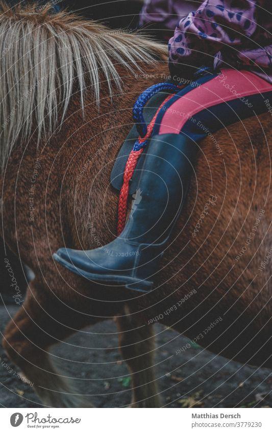 Pferd futtert Tier Außenaufnahme Mähne Island Ponys Natur Farbfoto Reiter Reiten Reitsport Reiterin Detailaufnahme reitstiefel
