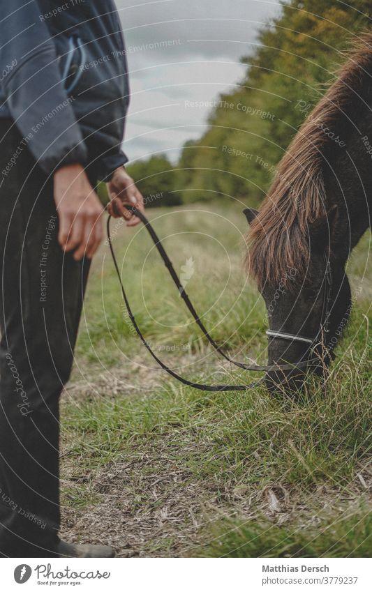 Pferd futtert Pferdekopf Tier Tierporträt Außenaufnahme Mähne Island Ponys Natur Farbfoto
