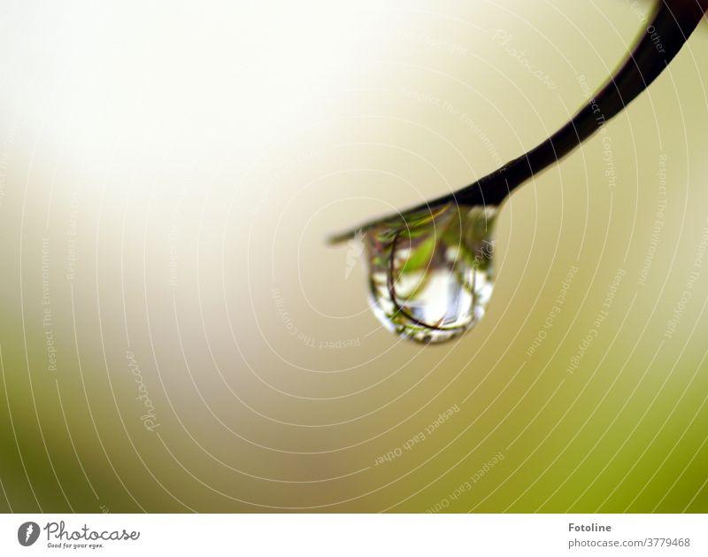 1750 / Mal wieder ein Tropfen von der Tropfentante - oder ein Regentropfen hängt an der Spitze eines Halms Wasser Wassertropfen nass Pflanze Nahaufnahme