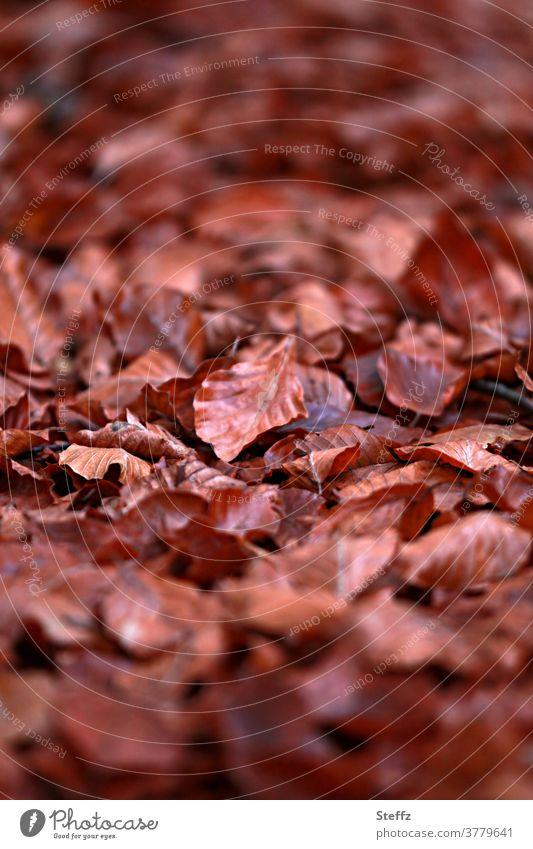 November-Blues Herbstlaub Herbstblätter Herbstblatt braun Novemberstimmung herbstlich Herbstlicht Herbsttagg Herbststimmung Herbstgefühle Herbstfärbung
