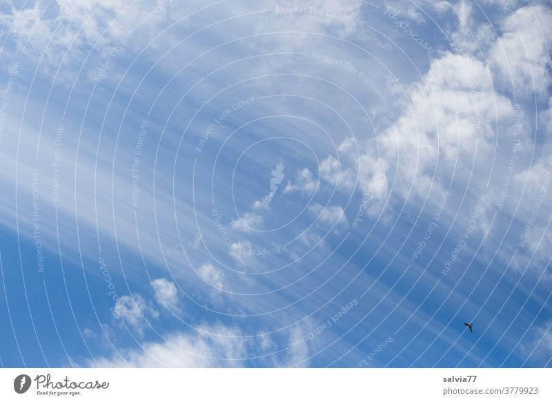 lebensnotwendig   Atmosphäre Himmel Wolken Schleierwolken blau Natur Vogel Schönes Wetter Luft Meteorologie Farbfoto Urelemente Klima Umwelt Hintergrundbild