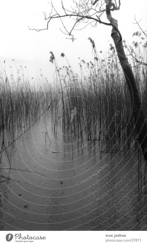 Winterimpressionen Natur Wasser See Stimmung karg