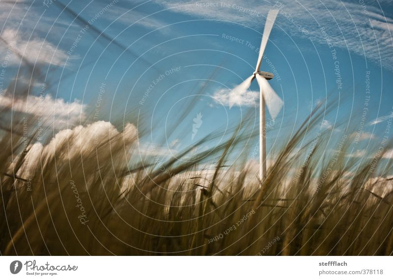 Windrad hinter Getreide Himmel Natur blau weiß Sommer Landschaft ruhig Umwelt Bewegung Horizont braun Feld Energiewirtschaft ästhetisch
