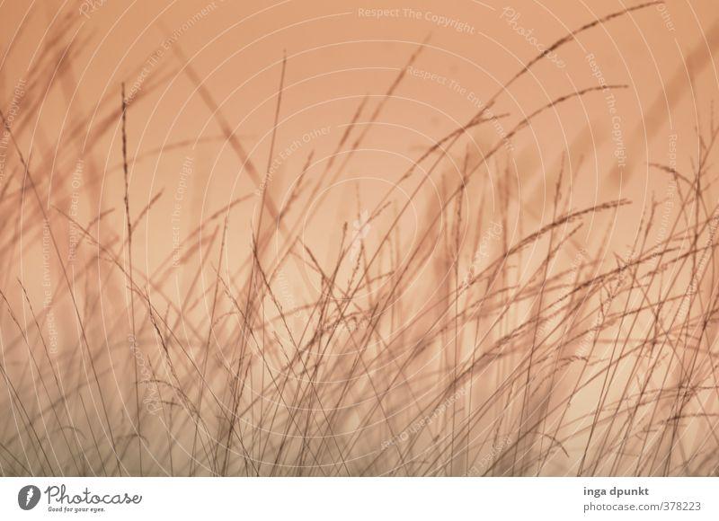 Blick ins Gras Umwelt Natur Landschaft Pflanze Sonnenaufgang Sonnenuntergang Garten Wiese natürlich Halm Naturschutzgebiet Umweltschutz Lebensraum Farbfoto