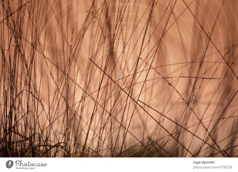 Graslandschaft Umwelt Natur Landschaft Sonnenaufgang Sonnenuntergang Pflanze Garten Wiese natürlich unten Umweltschutz Halm Abenddämmerung Licht Farbfoto