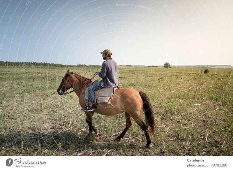 Reiter auf Farmland Blau Braun Grün Sommer Natur Landschaft Pferde Gras Pflanze Weide Landarbeiter Landwirtschaft Junger Mann Himmel Wiese Umwelt reiten Steppe
