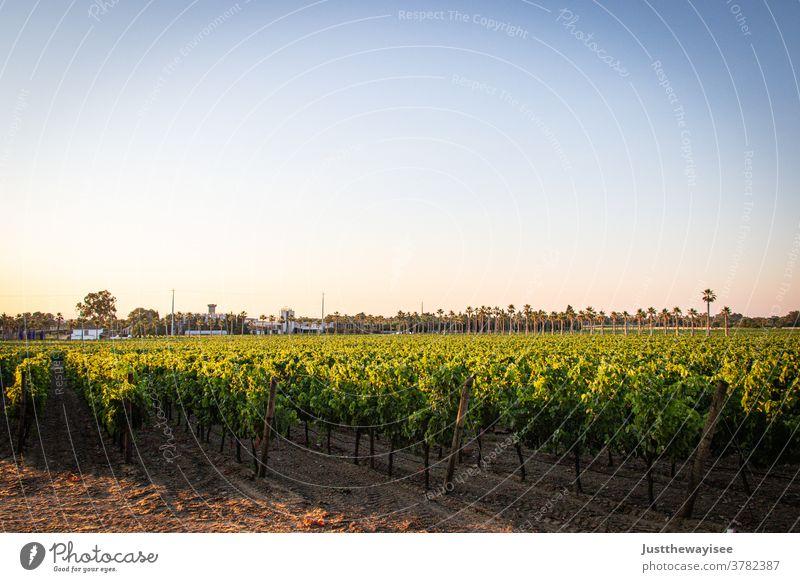 Portugiesischer Weinberg Land Ackerbau Herbst ländlich Landschaft Außenaufnahme Sonnenuntergang saisonbedingt Inszenierung Weinrebe Frühling Weinreben Feld