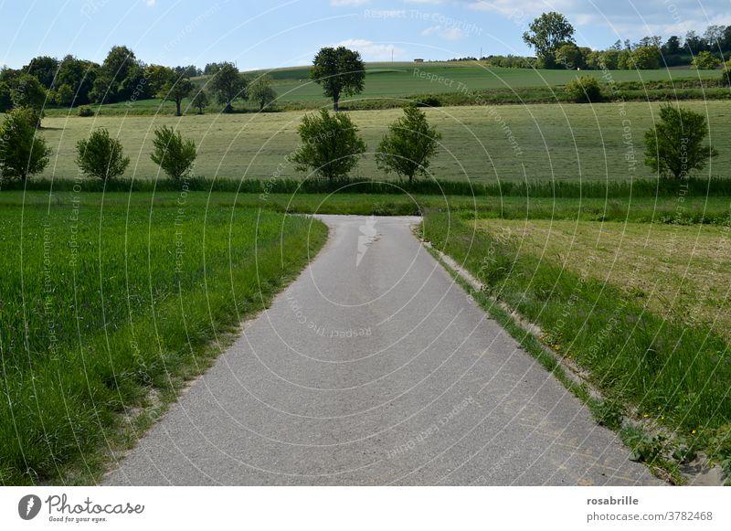 rechts oder links? - Ein Weg gabelt sich Weggabelung Entscheidung abbiegen Natur Spaziergang Landschaft entscheiden Kurve Änderung Straße Pfad gehen wandern