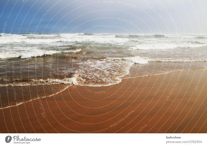 tag am meer südafrika Gegenlicht Sonnenlicht Kontrast Licht Tag Einsamkeit Farbfoto Außenaufnahme Menschenleer ruhig genießen träumen knysna brenton on sea