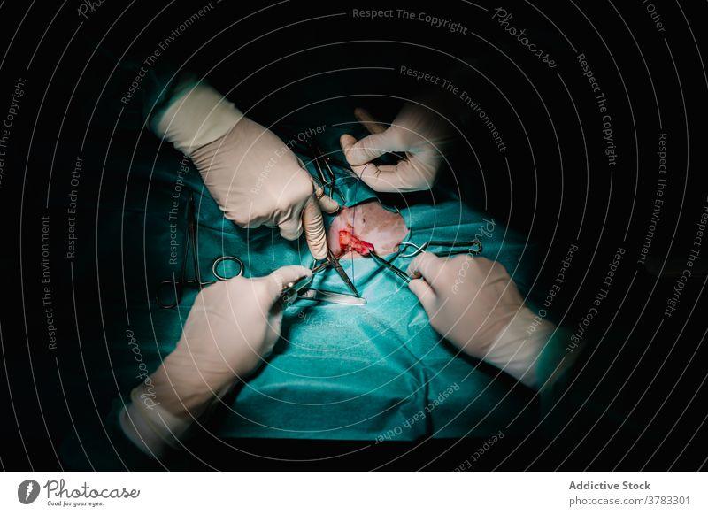 Chirurgen operieren Tier in der Tierklinik Chirurgie Operation chirurgisch Instrument Arzt Gewebe Operationssaal Veterinär Tierarzt arbeiten Medizin
