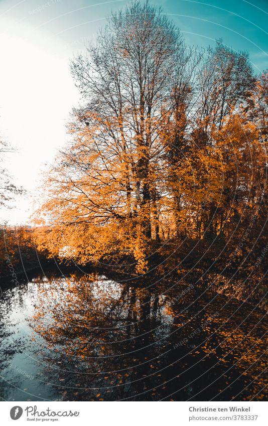 Herbstliche Bäume an einem kleinen See spiegeln sich im Wasser. Herabgefallene bunt gefärbte Blätter liegen unter den Bäumen und im Wasser herbstlich