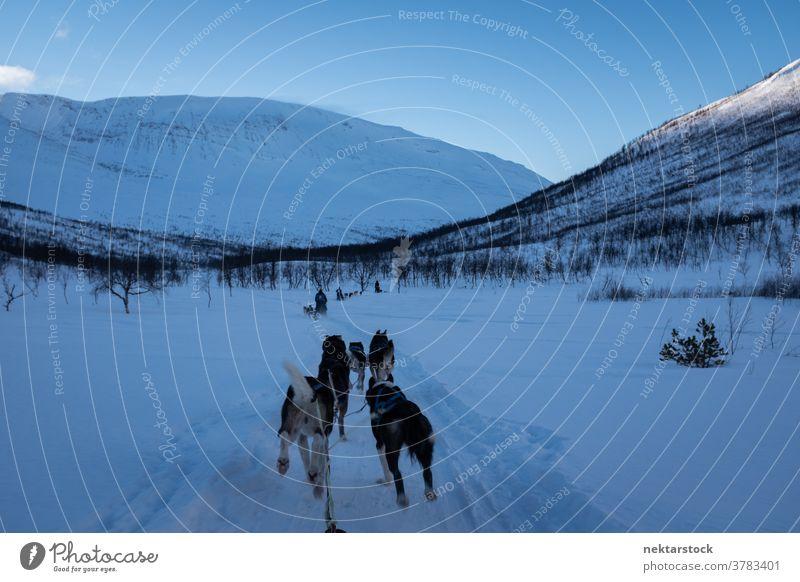 Schlittenhunde ziehen durch den verschneiten Pfad Hund ziehend Schnee Winter Sichtweise pov rennen Totale Norwegen Norden kalt natürliche Beleuchtung Natur