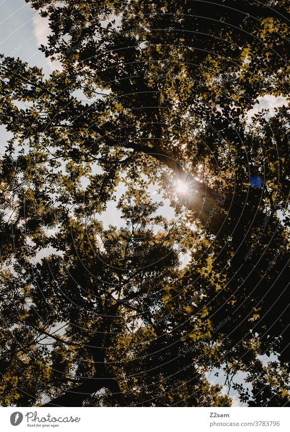 Sonnenstrahlen im Wald sommer sonnenstrahlen sonnenlicht UV-Strahlung wald natur landschaft nachhaltigkeit umweltschutz himmel Gegenlicht Schönes Wetter Umwelt