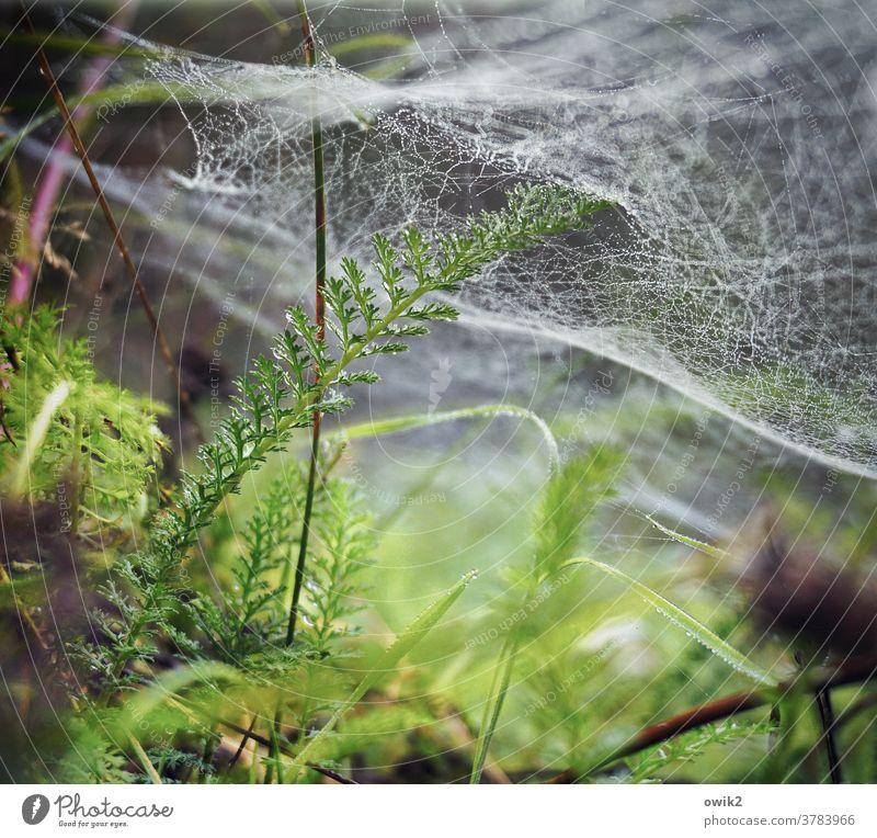 Unter Wasser Stengel Halm Spinnennetz Spinngewebe glänzend klein wild Blatt Sträucher Wassertropfen Pflanze Natur Umwelt Außenaufnahme Nahaufnahme