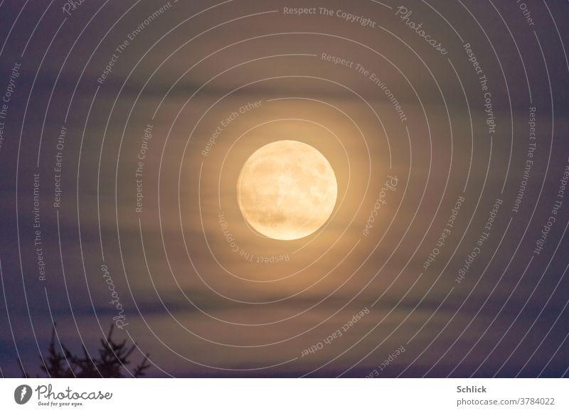Vollmond mit Korona hinter Schleierwolken und Baumwipfel golden Dämmerung Himmel zentriert zentral Gestirn Erdmond blau violett leuchten Aura Aureole Mond