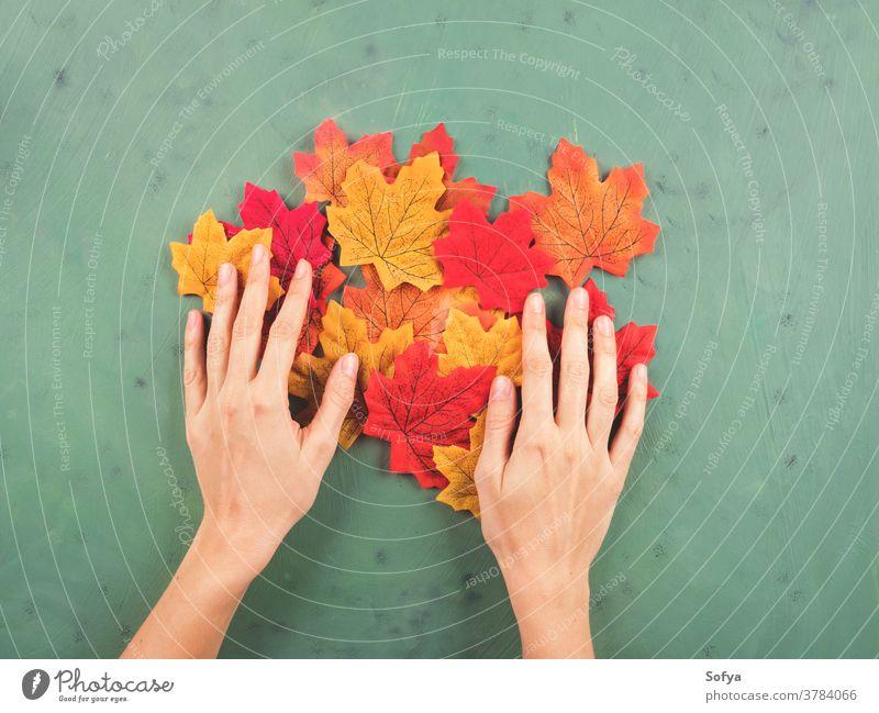 Weibliche Hand berührt Herbstblätter auf grün fallen Hände berühren Mode Beteiligung Frau Oktober Spaziergang Hintergrund Farbe Ahorn rot Blätter saisonbedingt