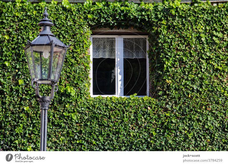 begründ wohnen Fassade Efeu Wand Wachstum Ranke bewachsen Natur Kletterpflanzen Fenster Straßenlaterne beschnitten Rahmen Brandenburg an der Havel