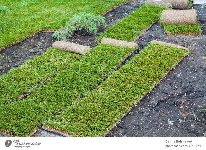 Stapelung von rollgrünem Rasengras. Verlegen von Rasengras in Rollen am Ort des Wachstums. deckend Naturrasen Rasenfläche Brötchen außerhalb Ebene Pflanze Hof