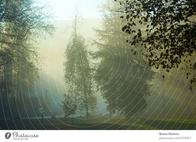 Morning has broken Natur grün Pflanze Baum Landschaft Wald Straße Wiese Herbst Stimmung braun Wetter gold Zufriedenheit weich Herbstlaub