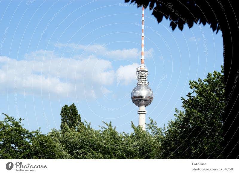 Spargel mit Salat - oder der Berliner Fernsehturm ragt zwischen viel Grün in den blauen sommerlichen Himmel Alexanderplatz Wahrzeichen Turm Architektur