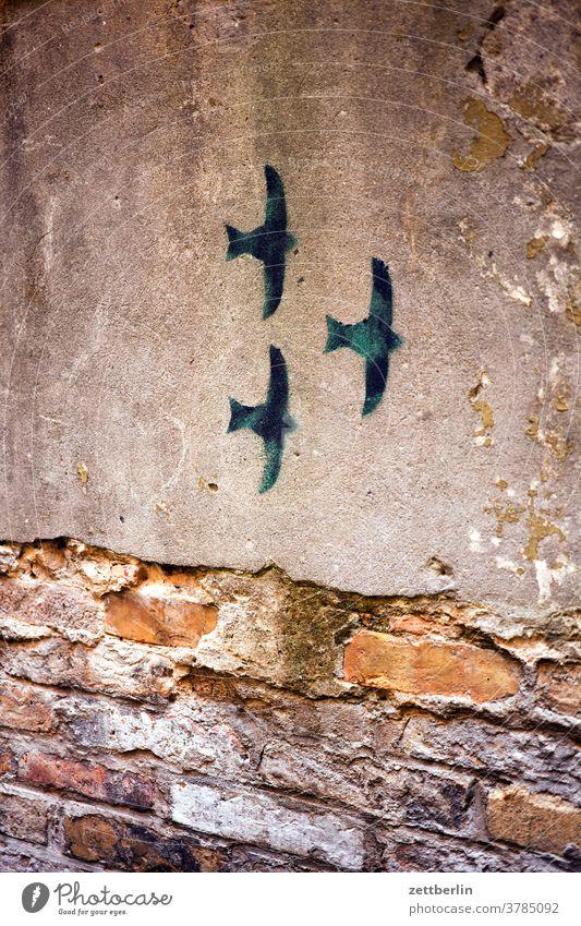 Drei aufgemalte Schwalben altbau vogel kunst wandbild malerei zeichnung illustration wandmalerei schwalbe außen brandmauer fassade fenster haus himmel
