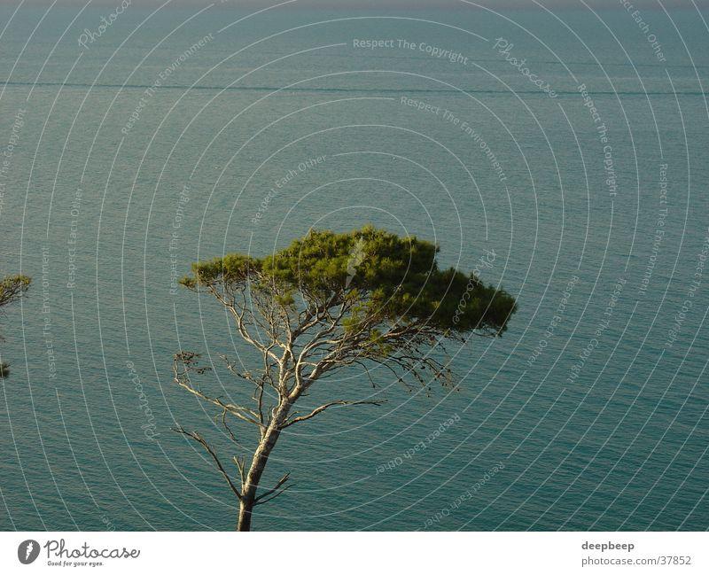 Pinie am Gargano Wasser Baum ruhig Einsamkeit Erholung