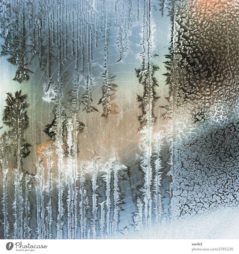 Aggregatzustand Winter Eis Frost Glasscheibe authentisch kalt bizarr Eiskristall Strukturen & Formen Tag Innenaufnahme Nahaufnahme Detailaufnahme Muster