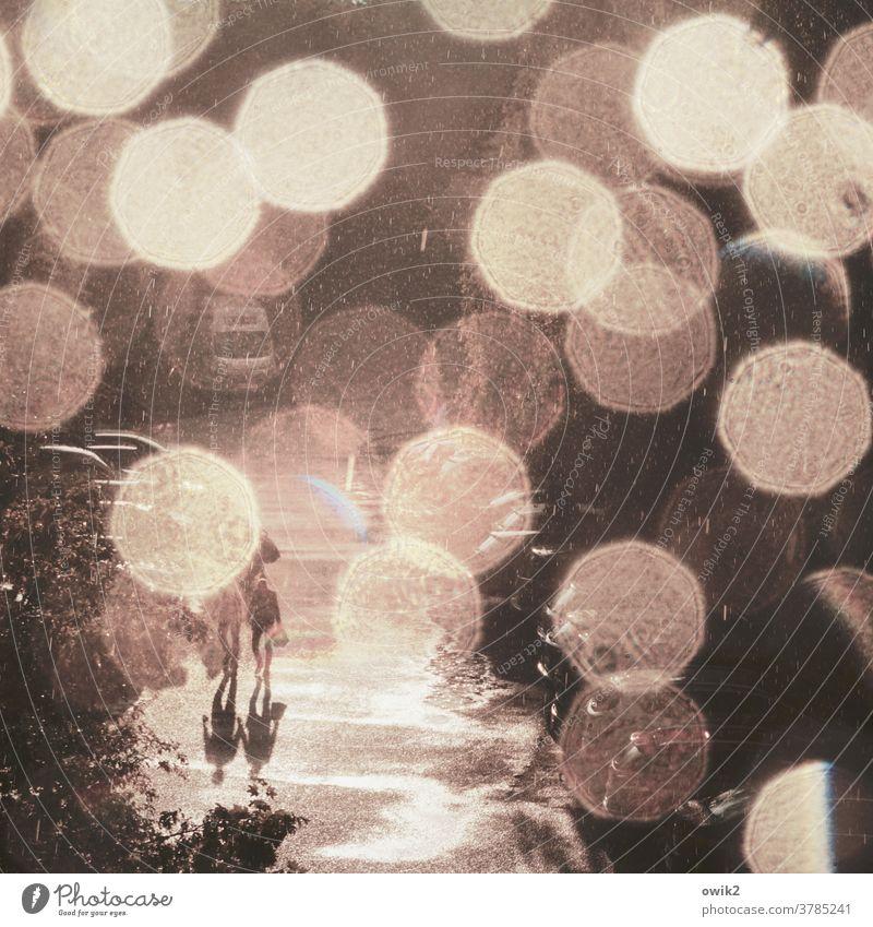 Funkenflug Lichtpunkte Abendrot Regentropfen Silhouette glitzernd gleißend funkelnd mystisch weich hell Wasser Sonnenstrahlen Kontrast Natur Schatten nass Bäume