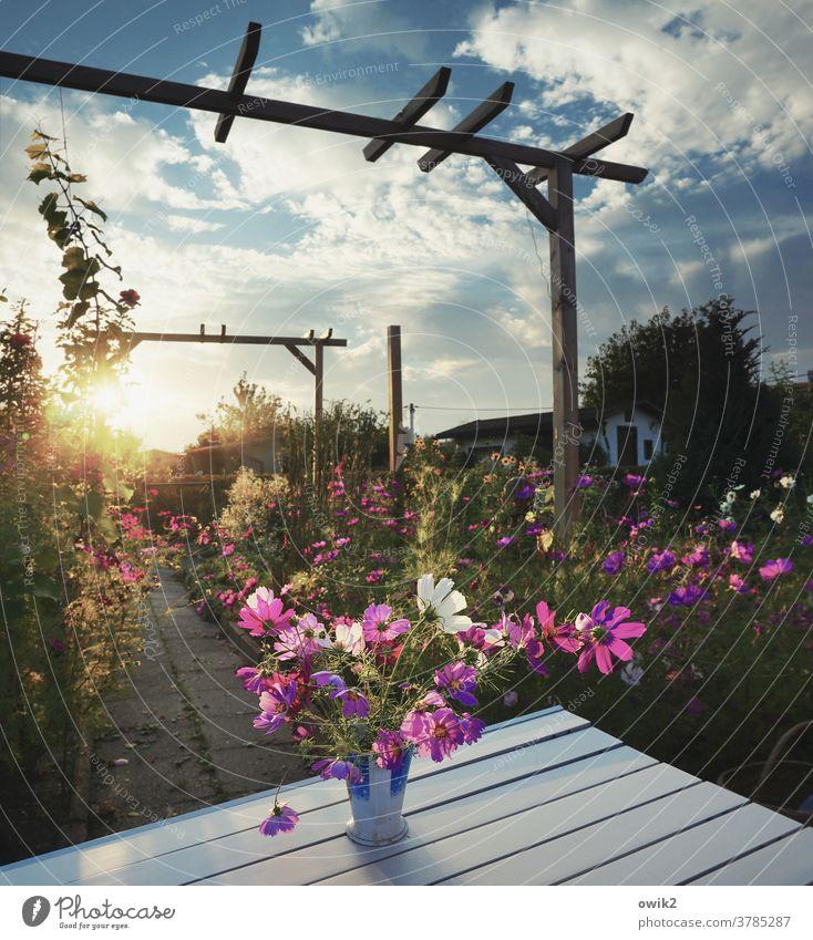 Gartenabend Umwelt Natur Landschaft Pflanze Himmel Schönes Wetter Sommer Sonne Wolken Blume Sträucher Blüte Wildpflanze Holz Mast Pergola Schmuckkörbchen