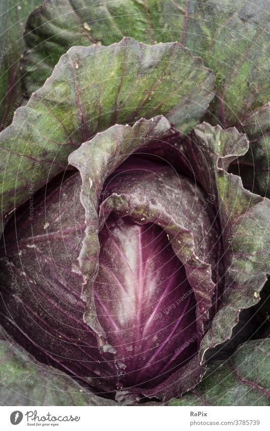 Detailaufnahme eines Rotkohls. Gemüse vegetables Rotkraut cabbage krautsalat Nahrung essen food nahrungsmittel gesundheit vitamine health struktur küche