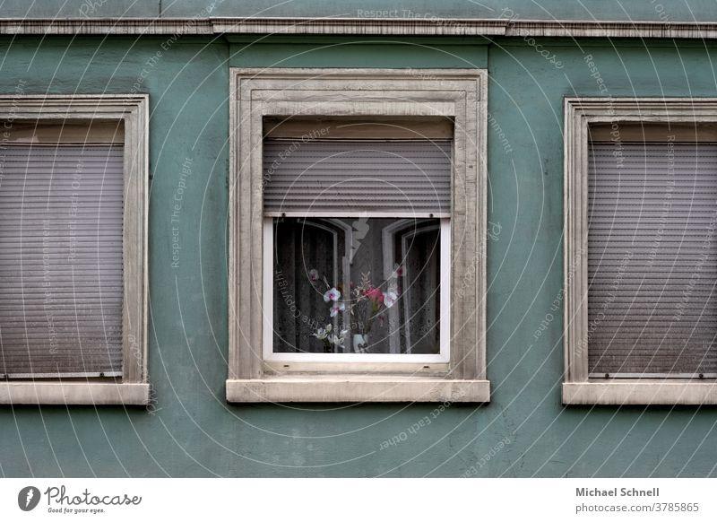 Alte Hauswand, Fenster mit geschlossenen Rolladen und ein Fenster mit Blumen Wand Fassade Mauer Menschenleer Außenaufnahme Farbfoto Gebäude trist grau alt