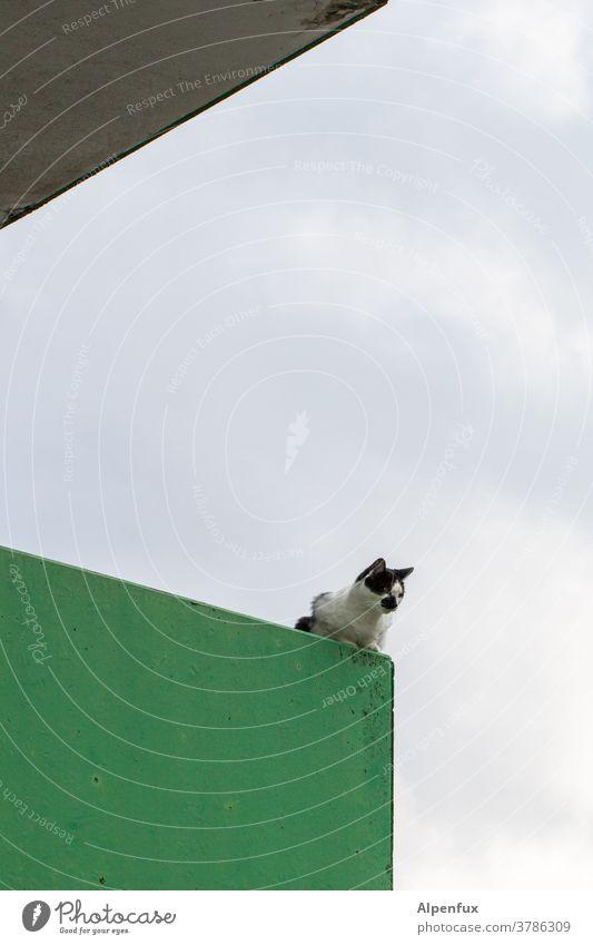 (M)aussichtsposten Katze beobachten beobachtend Beobachtende Katze Fell Farbfoto Neugier niedlich Schnurrhaar Tierporträt Blick Katzenkopf Tiergesicht Hauskatze