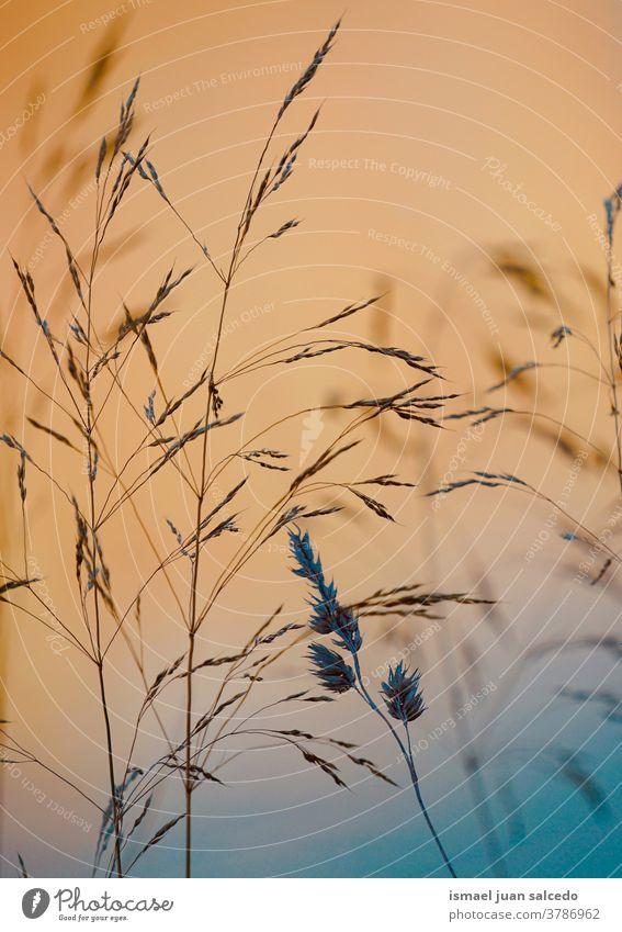 schöne Blumen und Sonnenuntergang in der Natur im Herbst Pflanzen Himmel Sonnenlicht hell Silhouette Farben farbenfroh Garten geblümt romantisch Schönheit
