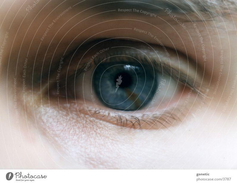 Auge Mensch Detailaufnahme