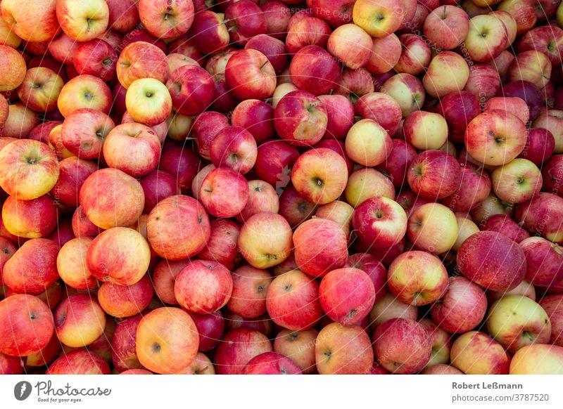 viele köstliche reife Äpfel (Santana) auf einem Haufen santana Frucht Essen Apfel rot frisch Absatzmarkt gesund organisch Ernte niedlich saftig Diät Herbst gelb