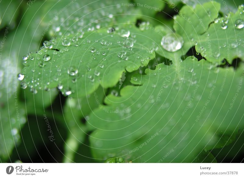 Nach dem Regen Wasser grün Pflanze Blatt Wassertropfen