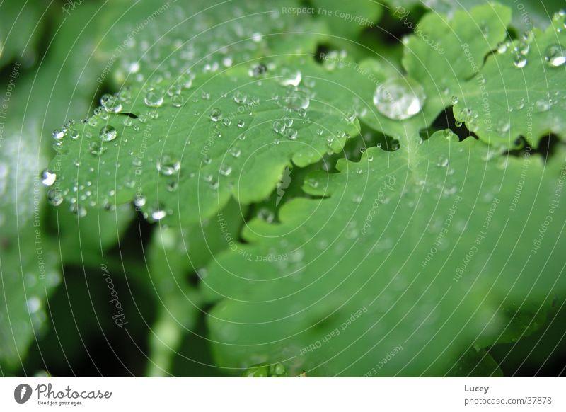 Nach dem Regen Wasser grün Pflanze Blatt Regen Wassertropfen