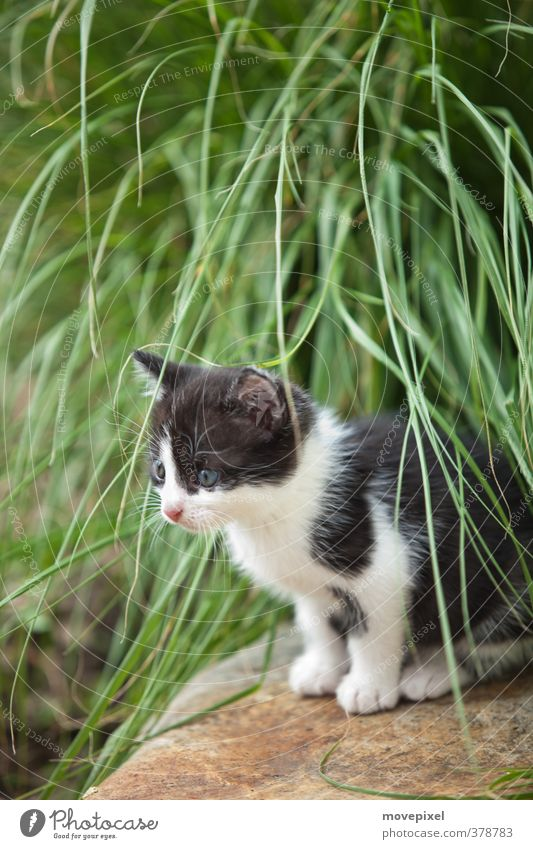 kleine Katzen haben kleine Tatzen Grünpflanze Haustier 1 Tier Tierjunges Blick sitzen warten kuschlig grün schwarz weiß Interesse Mietze Mietzekatze Mietzetaze