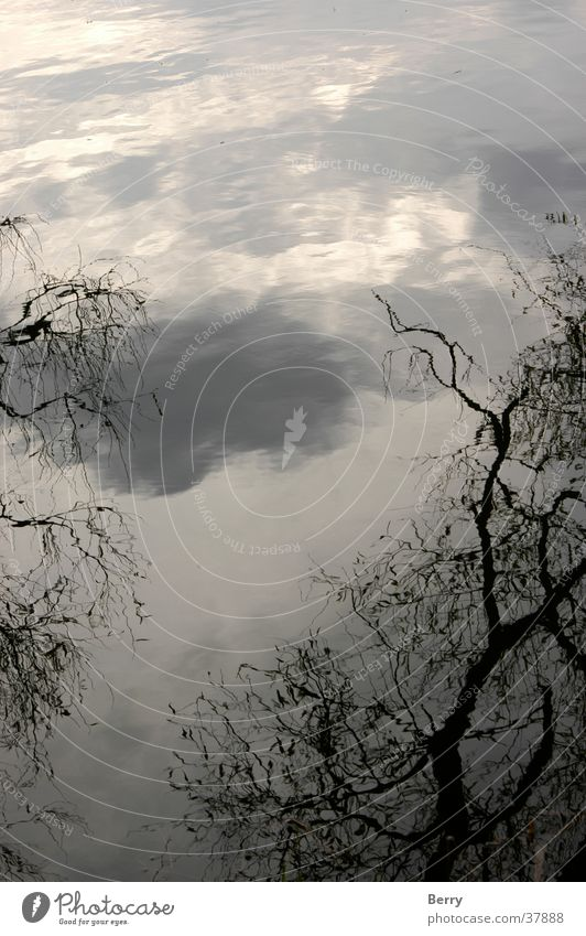 Wolkenstimmung Baum Hintergrundbild Ast Formation Vordergrund Lichtstimmung