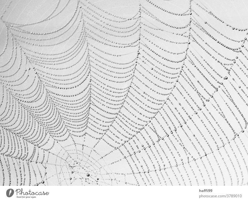 Spinnennetz mit feinen Tröpfen Morgentau tröpfchen Tröpfchen Netz spinnenweben nass Wassertropfen Tropfen Natur Regen Tau feucht Netzwerk Herbst natürlich
