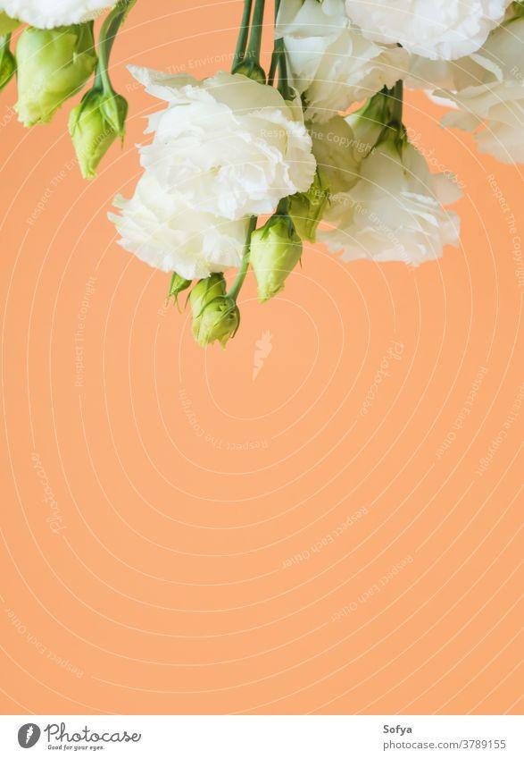 Schöner Blumenstrauss aus Eustoma-Blumen auf Orange eustoma Lysianthos Hochzeit Design Mode Mutter Blumenstrauß sehr wenige geblümt orange trendy Hintergrund