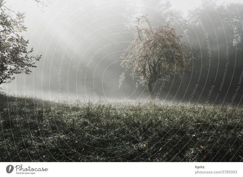 Herbstsonne Wiese Licht Baum Natur Nebel Außenaufnahme Stimmung Farbfoto Sonnenlicht Menschenleer