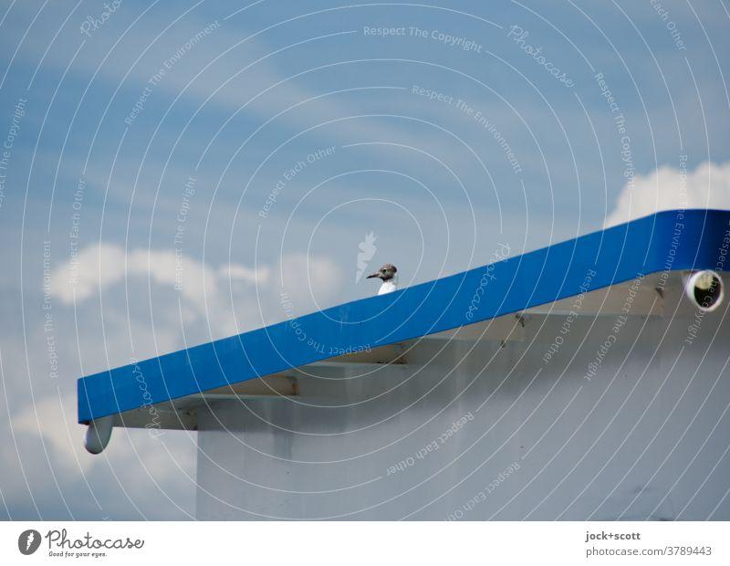 Wenn sich ein Vogel auf große Reise begibt, nimmt er auch mal gerne ein großes Schiff Möwe Schifffahrt große Fahrt Symmetrie Aussichtspunkt