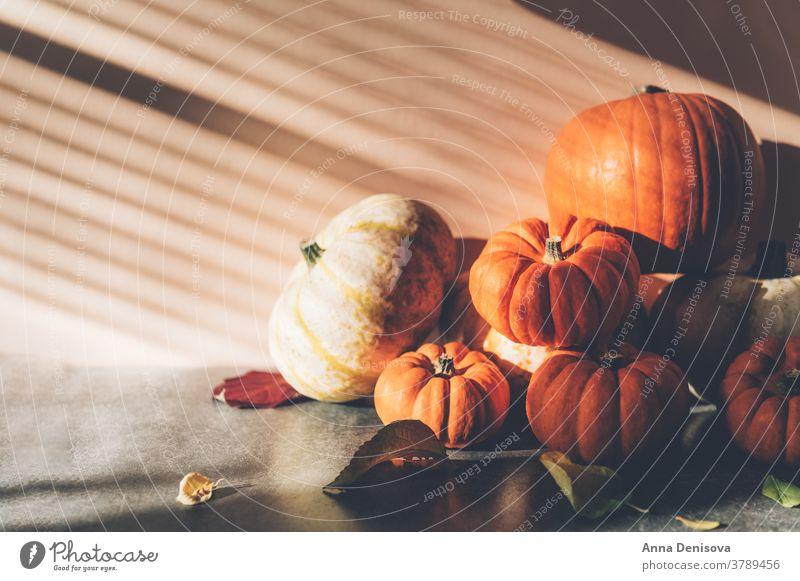 Kürbisse mit starken Schatten fröhliches Thanksgiving rustikal fallen Haufen Squash Feiertag Blatt Gemüse Herbst Dekoration & Verzierung orange Postkarte Saison